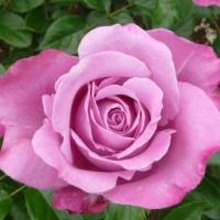 philip_rose_200