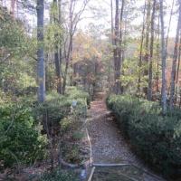 garden_catch
